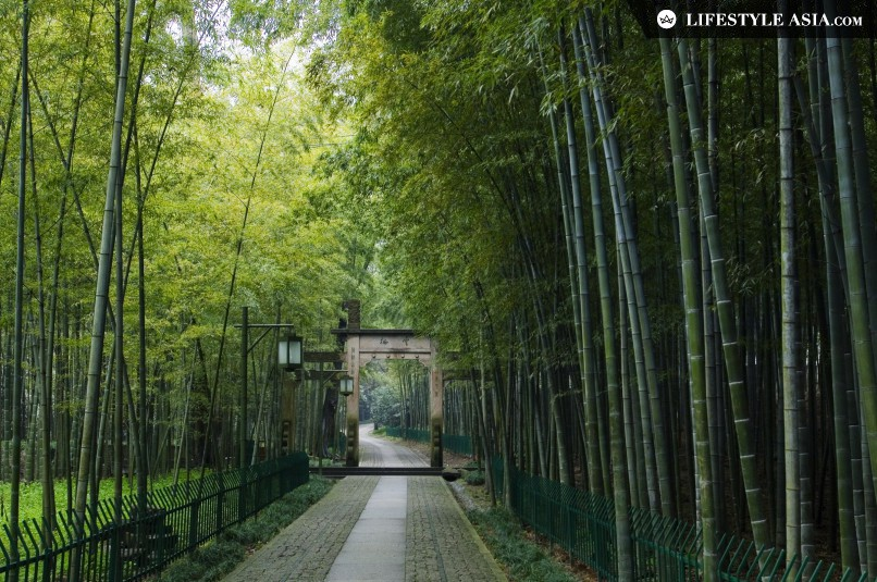 Yunxi Bamboo Forest