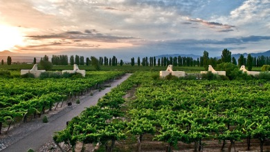 Mendoza Argentina Cavas wine lodge  II